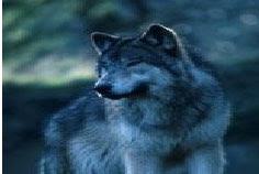 "<a href=""http://www.personalinjurylawyerinc.com/Animal-Attacks.html"">Animal Attack</a>"