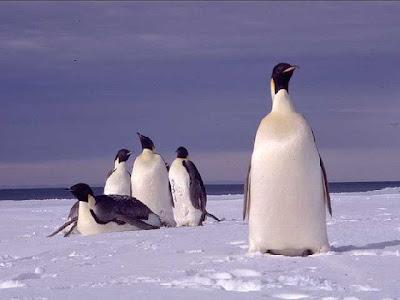 cute penguin photos collections