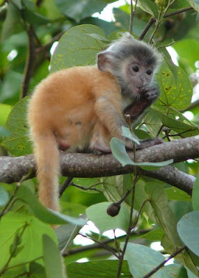 photos of cute monkeys in trees images/posters
