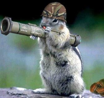 pictures of squirrel with gun squirrel hunting