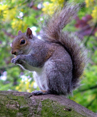 cute & small animal squirrel pictures colection