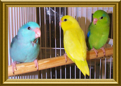 colourful pet birds images