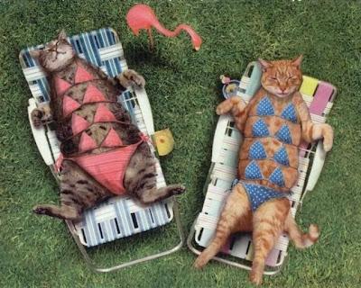 funny cats swim suite dress photos