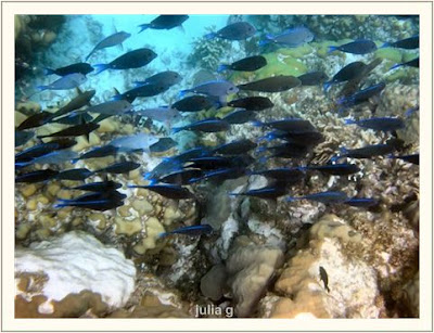 wild life of Ocean fishes wallpapers