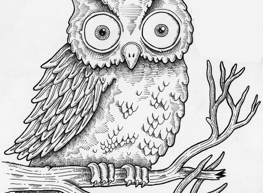 Stars Animals Wallpapers Photos Owls Drawing Pictures