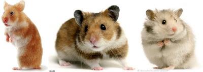 Nem Todo Mundo Gosta de Hamsters