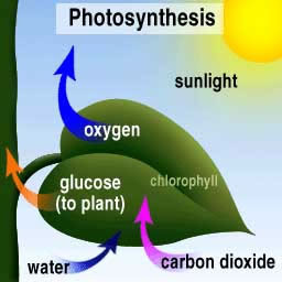 inorganic substance in photosythesis Welcome to the official photosynthesis/cellular  energy from sunlight or inorganic substances to make  in the concentration of a substance.