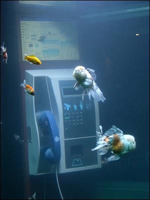 Cabina telefonica o acuario? Acuario+en+un+telefono+04