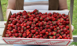 box of strawberries, 10 lbs of berries, fresh local produce