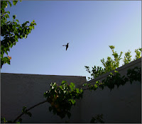 Hummingbird and sky