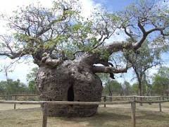 prison tree, DERBY
