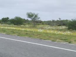wild flowers west coast WA