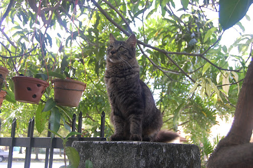 Kucing Kesayangan