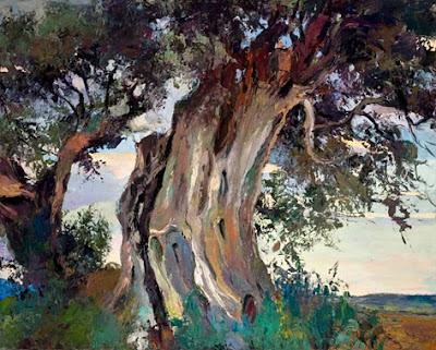 Las oliveras acompañan el paso del tiempo- Ramón Vilanova