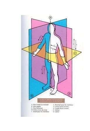 biologie du corps humain pdf