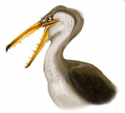"""""""Pelagornis chilensis"""", el ave voladora más grande del mundo"""