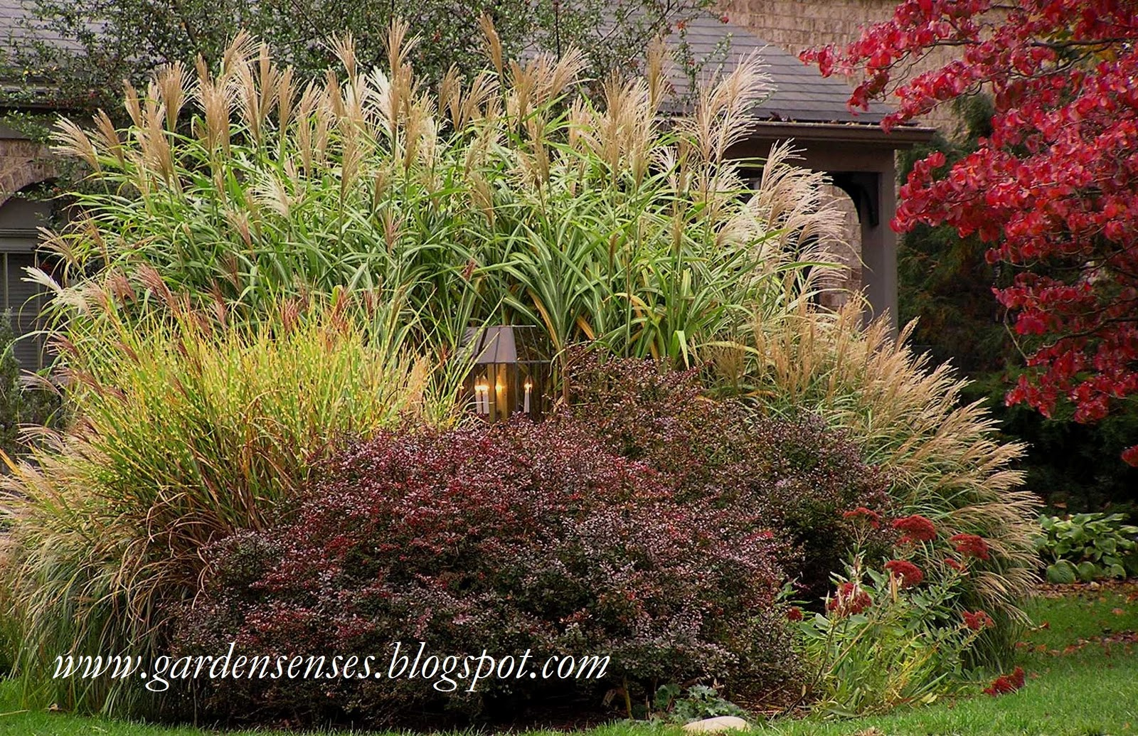 Garden Sense: Great Grasses
