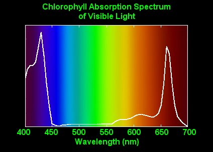 Themarijuana Blogs Plant Light Absorption Chlorophyll