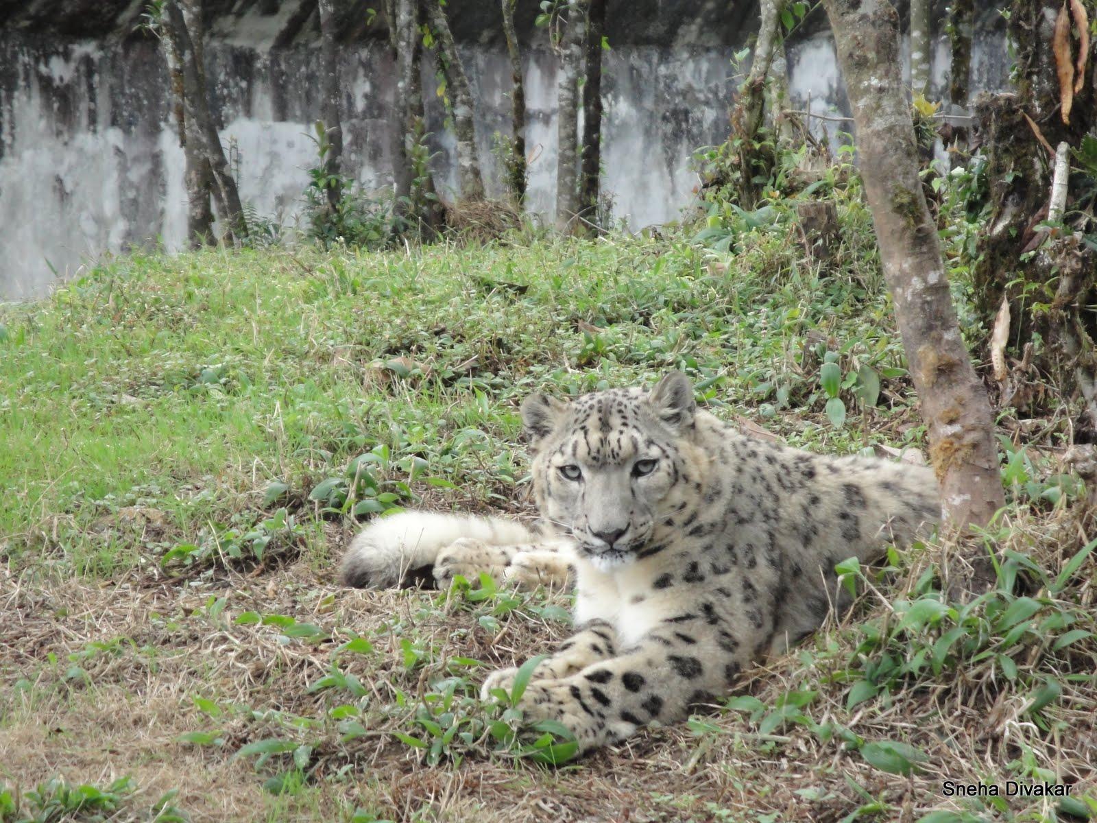 Photo log: Himalayan cats