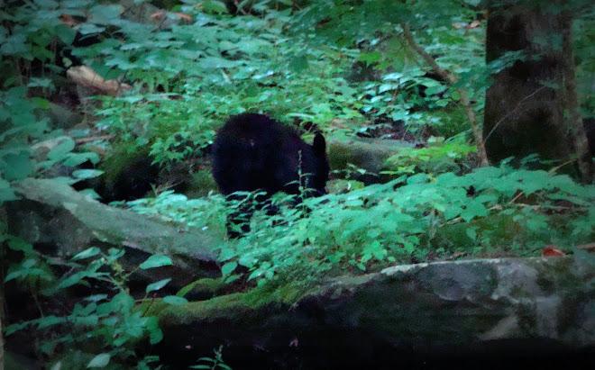 Our Bear
