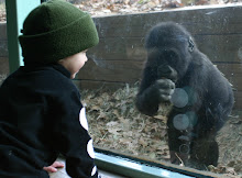 Jake meets gorilla