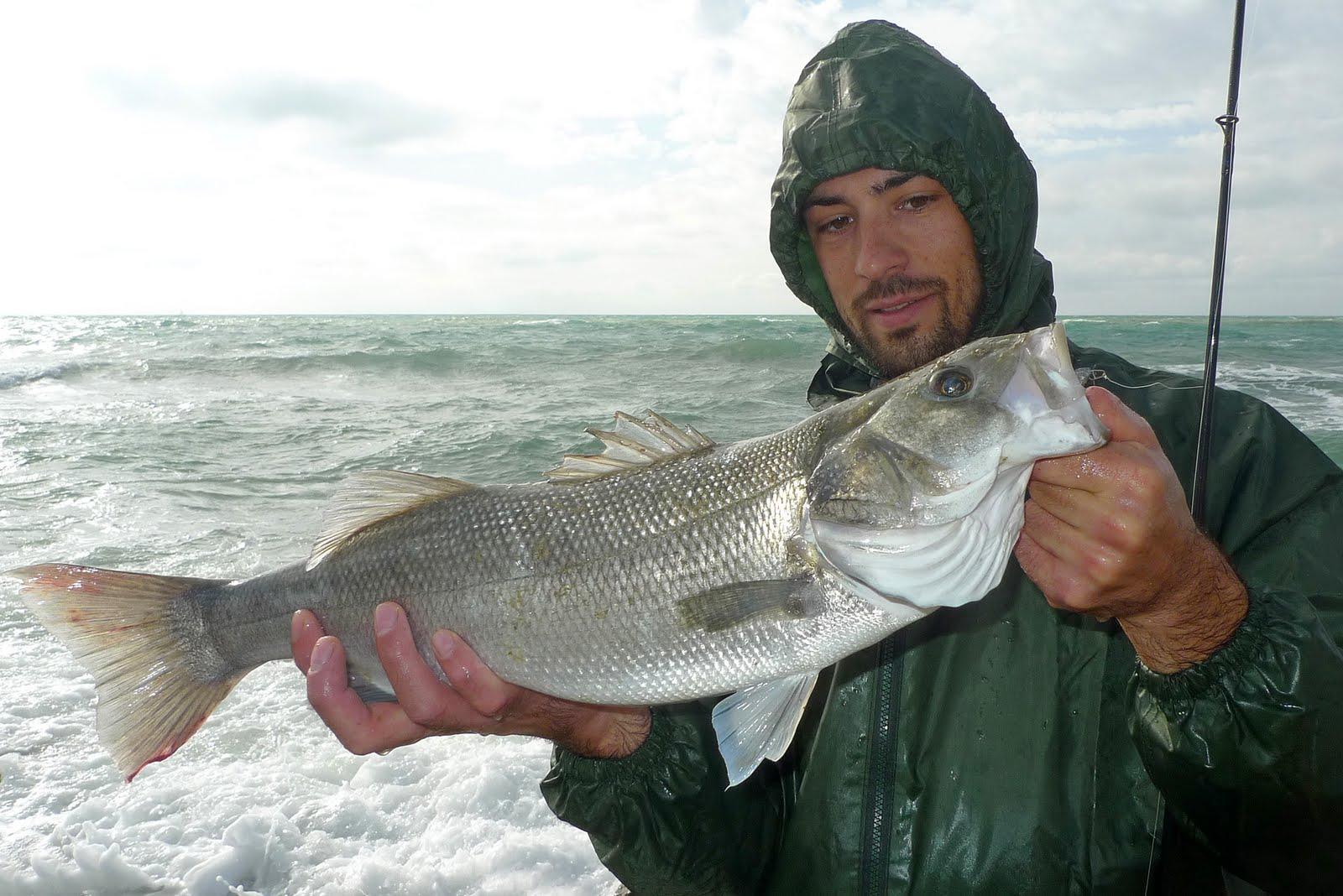 Shore fishing passion spigole mare mosso e gomma for Cucinare branzino 5 kg