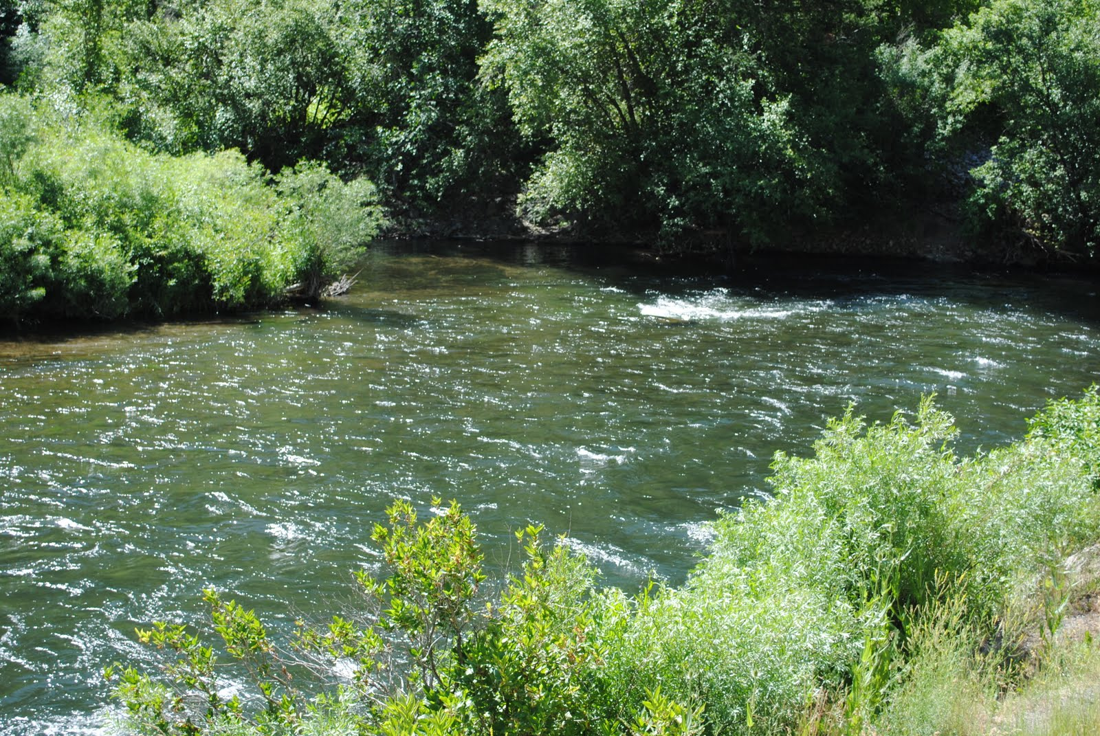 Woody 39 s fishing hole provo river for Provo river fly fishing