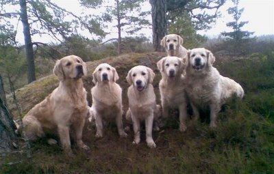 6 av Badirashundene