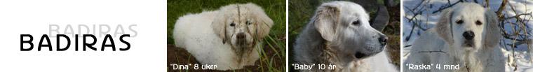 Fotogalleri mine hunder