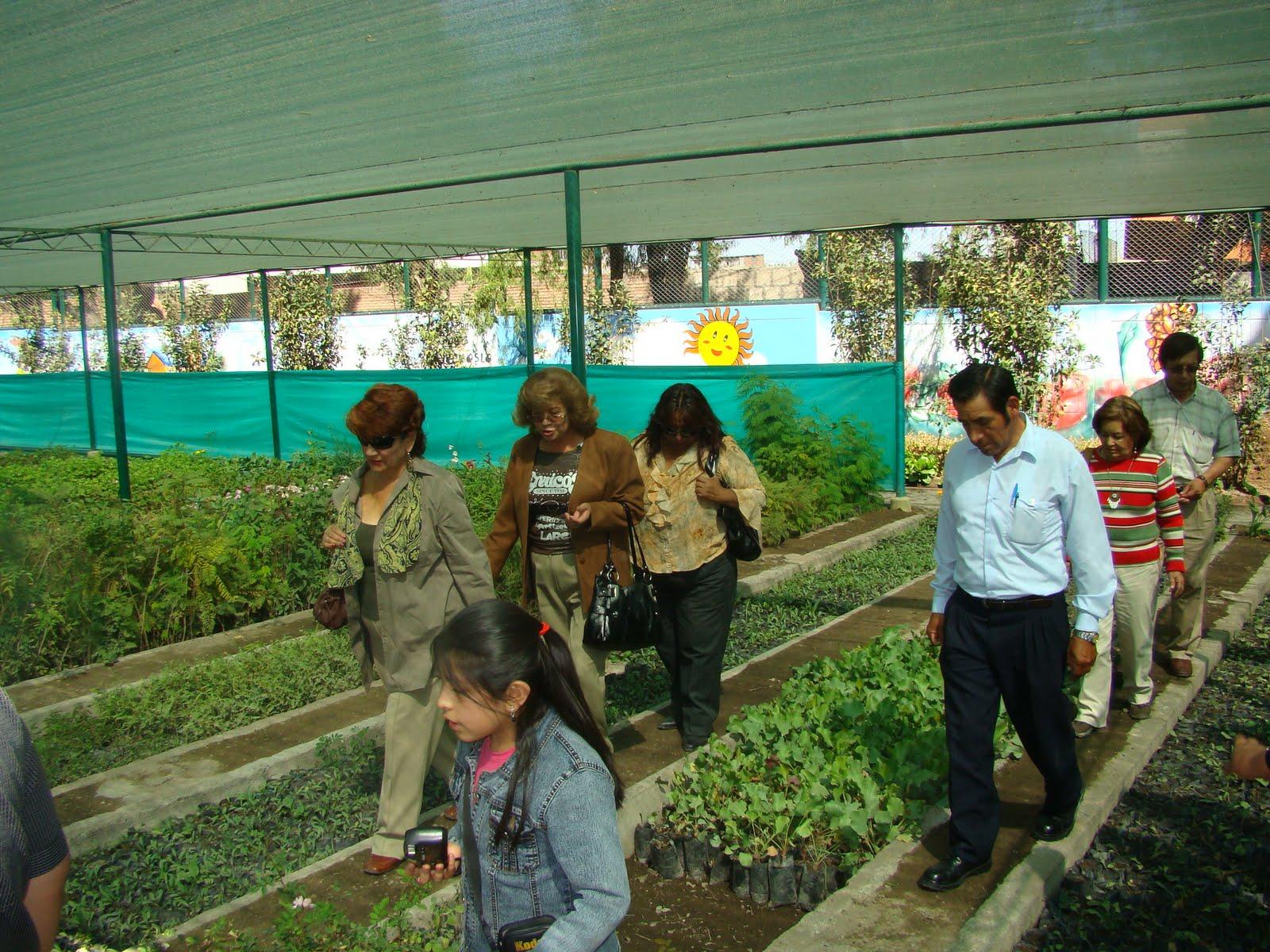 Muni arequipa inauguraron vivero municipal en arequipa for Vivero municipal