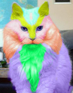 colored cat