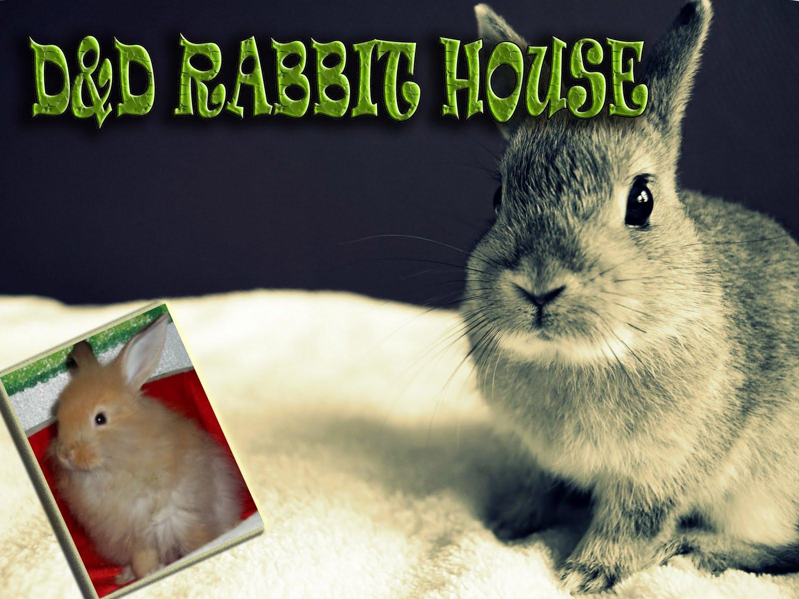 D&D Rabbit H0use...