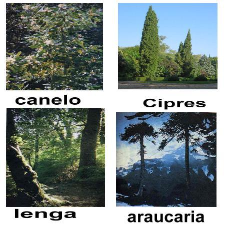 Zonas geograficas de chile for Poda de arboles zona sur