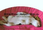 Wauzi-Welpen-Hilfe