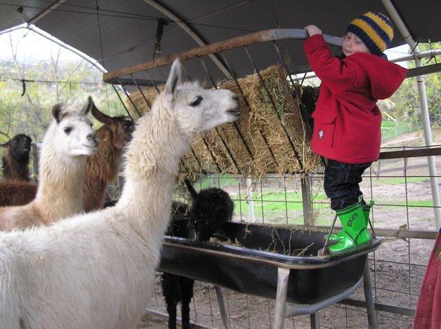 [Llivio+lloves+llamas]
