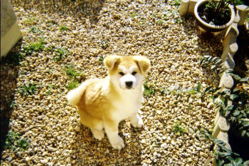 Yumi (la maman) à presque 3 mois