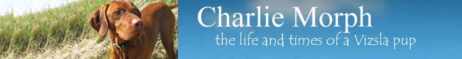 charlie morph