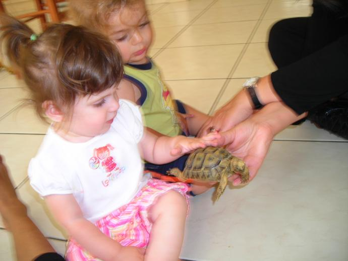 [bobo+and+the+turtle]
