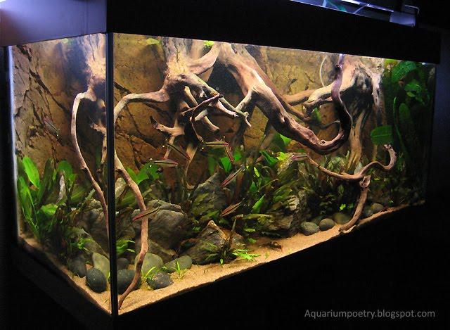 My Aquarium Scapes The River Bank