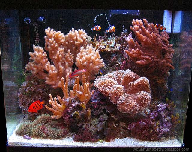 my aquarium scapes red sea max 130d. Black Bedroom Furniture Sets. Home Design Ideas
