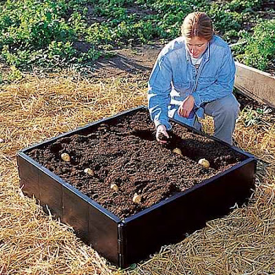 Site Blogspot   Shops on Suttons Co Uk Shop Gardening Equipment Vegetable Growing Raised Bed