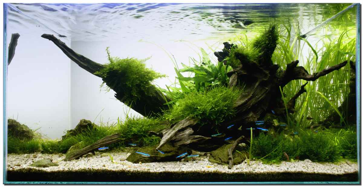 Japan modern aquascape aquascape gallery - Gallery aquascape ...