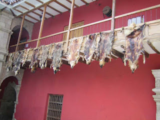 Perros usados como alfombras 18