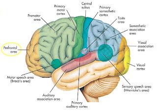 7 Misteri Unik Dan  Aneh Dalam Otak Manusia.serbatujuh.blogspot.com