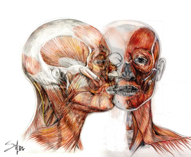 SILuVeNe: Dibujos de anatomía