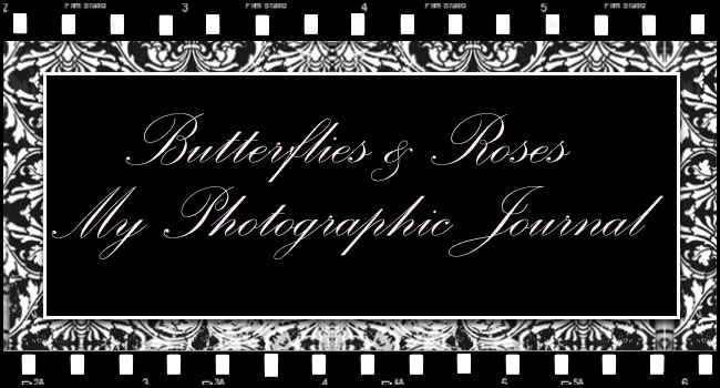 Butterflies & Roses ....... My Photographic Journey