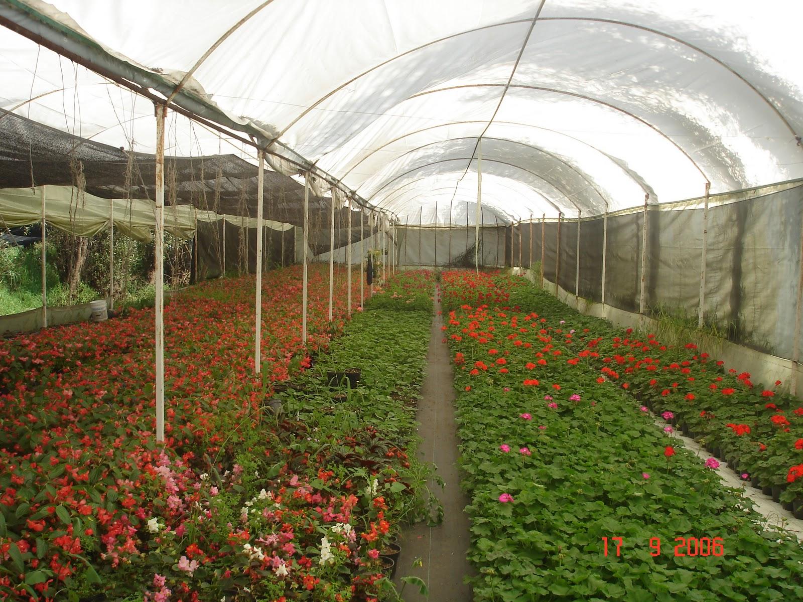 Viveros ecoflor for Vivero organico