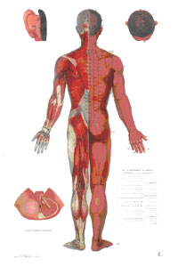 canalul inghinal