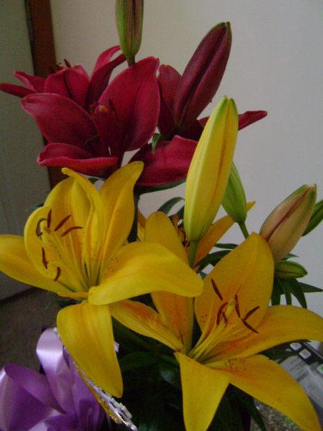 [lilies]