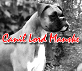 Canil Lord Manske - Boxer